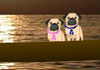Pugs in Venice Romantic