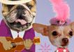 French Valentine Doggies
